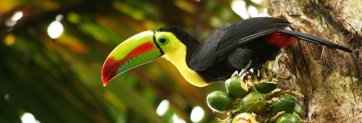 Go Tours Costa Rica