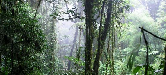 cloud-forest-tour-in-costa-rica