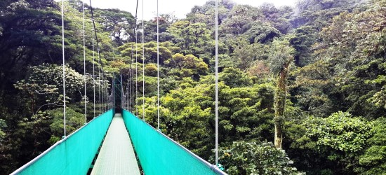 hanging-bridges-tour-in-the-costa-rica-cloud-forest-
