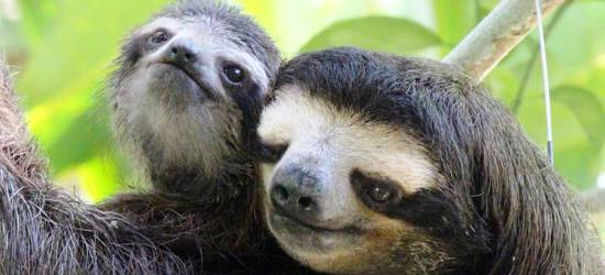 sloth-sanctuary-near-cahuita-national-park