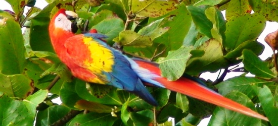 spotting-wildlife-during-transfer-from-arenal-to-manuel-antonio-
