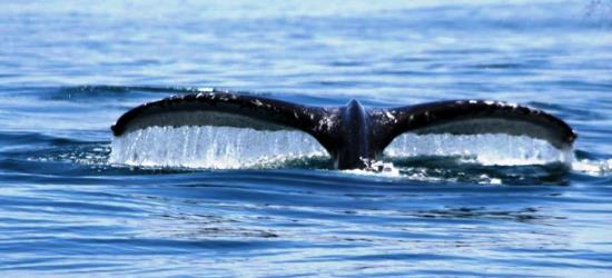 whales-and-dolphins-observation-tour