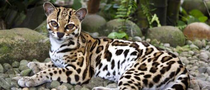 Unfortunately a big amount of species are currently in danger of extinction
