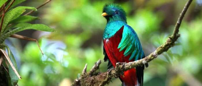 The top Birds of Costa Rica will call your attention at the first moment, some can only be found deep in the forest