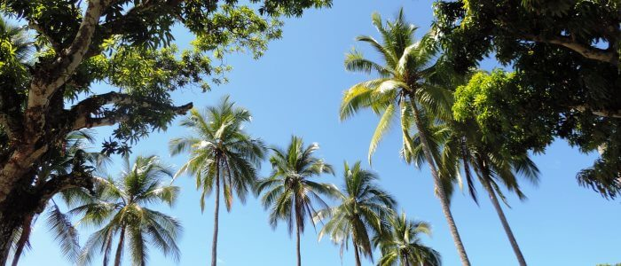 costa rica top destinations palm trees