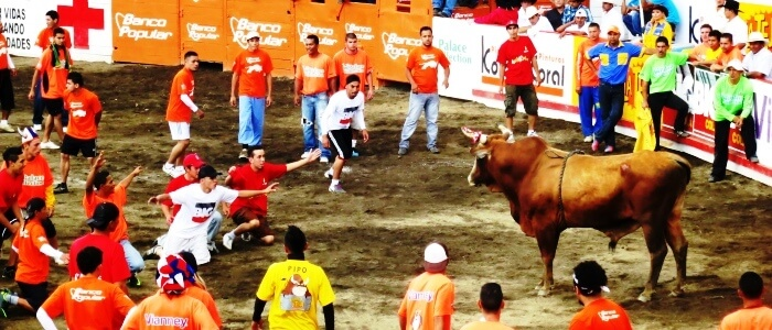 Bull Fighting during fair in San Jose
