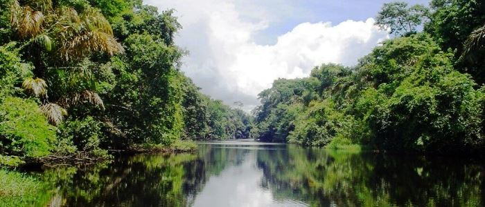 Tortuguero - the Amazon jungle of Costa Rica