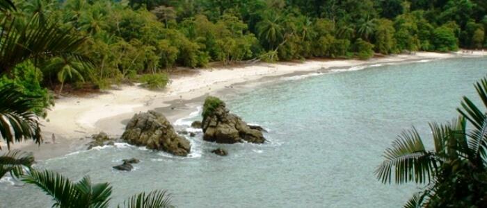 Beach and Rainforest