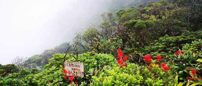 Cloud Forest section
