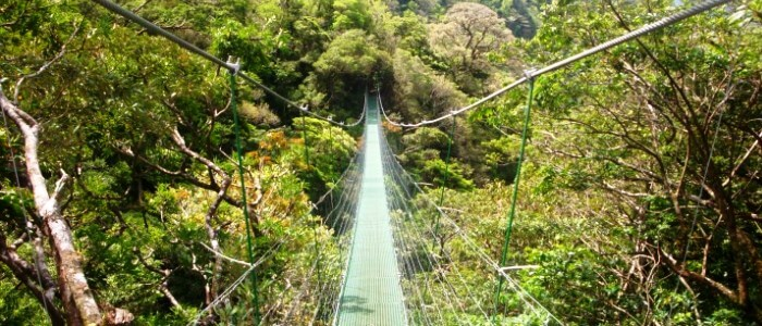 Hainging bridge in the Rainforest of Guanacaste