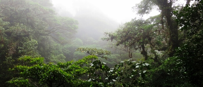 Cloud Forest reserve