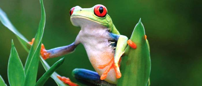 frogs and toads are not too dangerous depending of the species of course