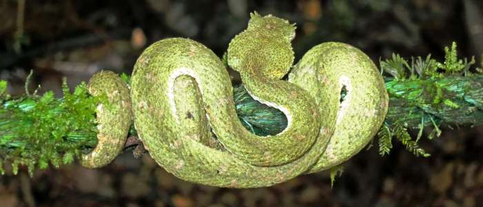 there are around 145 snakes 23 of them venomous and the deathliest can kill you in only 1 hour if you don´t receive a treatment