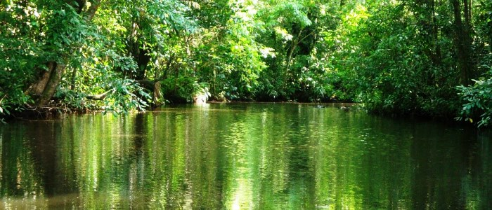 visit tortuguero national park when touring around costa rica