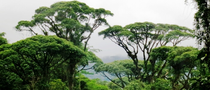 Green forest of Costa Rica