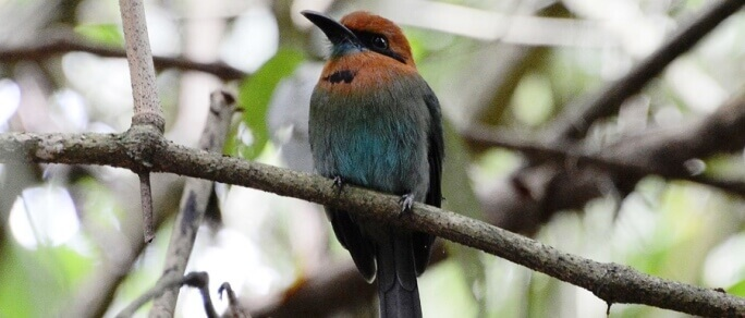 arenal bird watching tour