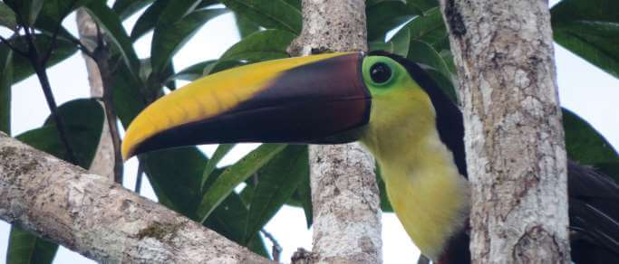 arenal volcano combo tour toucan in the rainforest