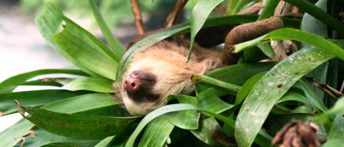 arenal volcano experience tour sloth