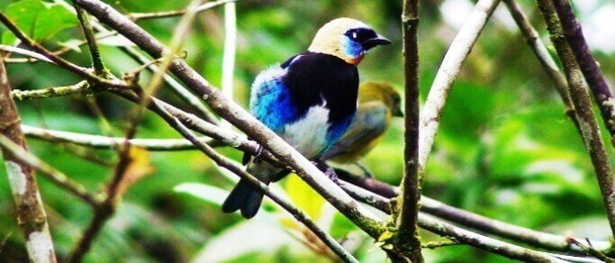 bird watching tour from la fortuna