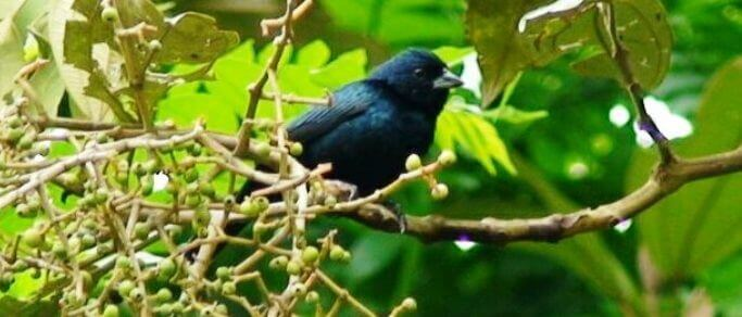 bird watching tour in the rainforest of costa rica