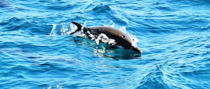 dolphin watching during the tour