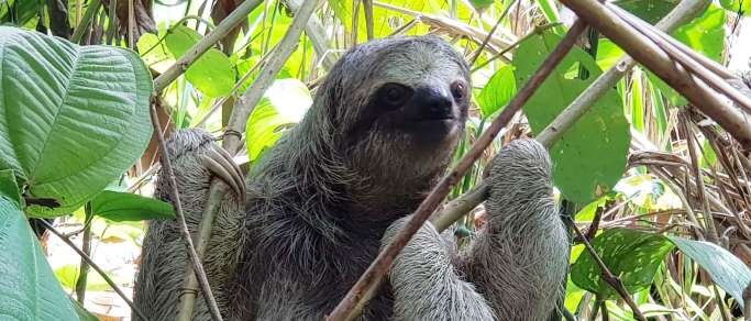 guanacaste sloths tour rainforest hanging bridges