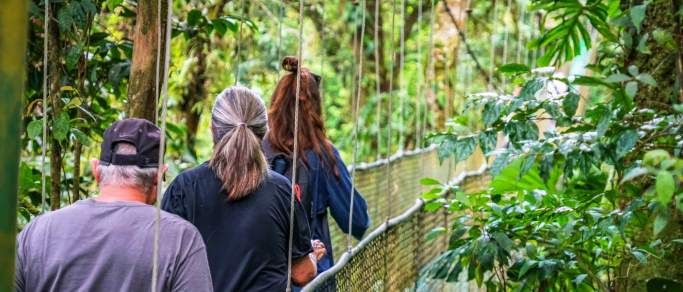 hanging bridges tour in guanacaste