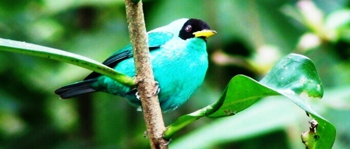 la fortuna bird watching tour