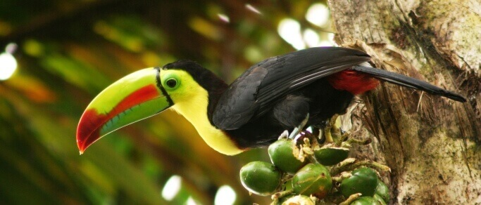 observe native bird species of costa rica