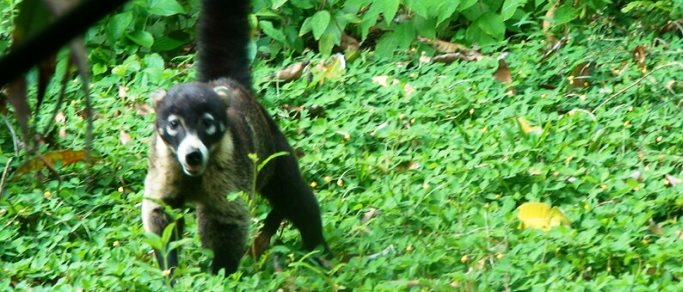 observe wild animals on your costa rica vacation