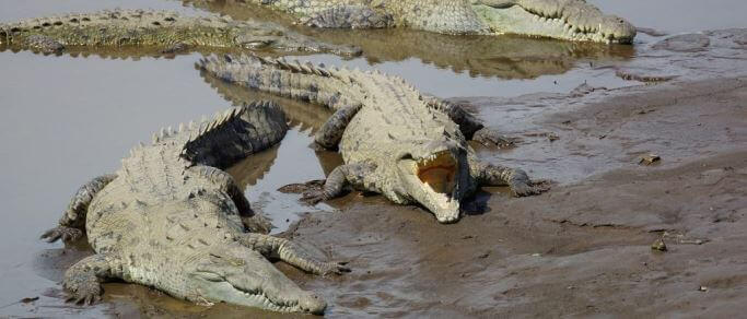 palo verde wildlife tour crocodiles