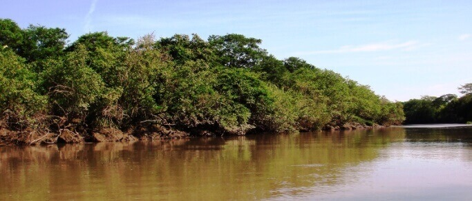 palo verde wildlife tour tempisque river
