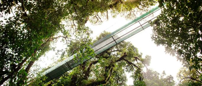 san jose tour to monteverde hanging bridges
