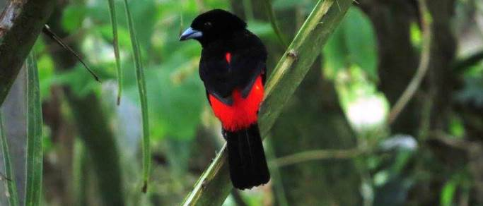 see costa rica birds on this tour