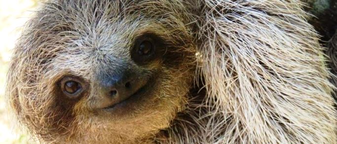sloth encounter and cultural towns tour