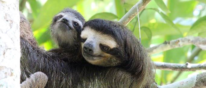 sloth sanctuary caribbean beaches tour