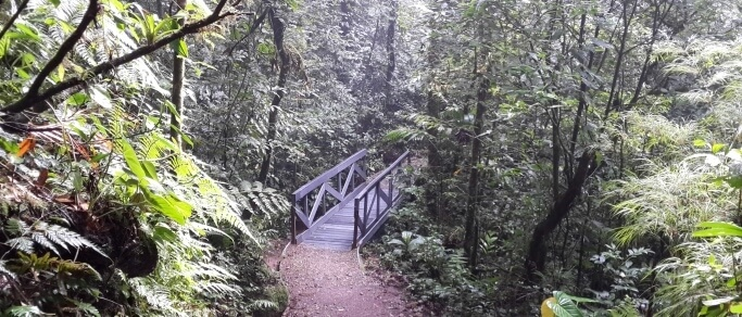 tour to monteverde cloud forest reserve