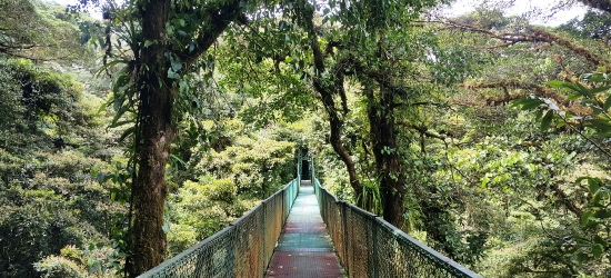 monteverde cloud forest tour from san jose