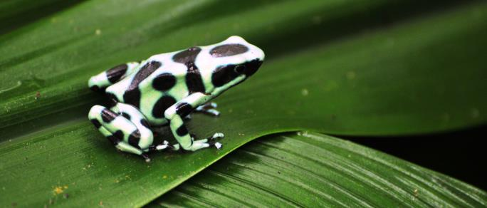 beautiful frog in the rain forest
