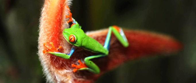 rainforest animals of costa rica