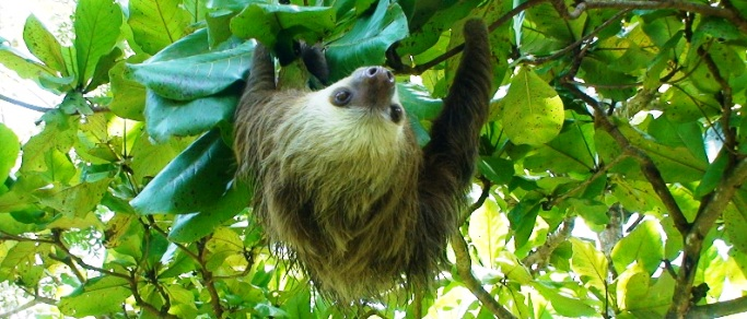 see wildlife during the adventure tour in costa rica