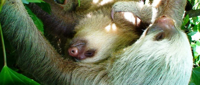sloth sanctuary and caribbean vacation