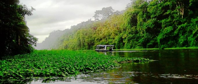 tortuguero jungle boat tour