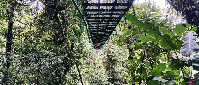 vacation in costa rica including monteverde hanging bridges