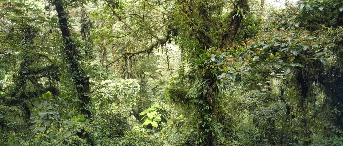 visit monteverde while touring around costa rica